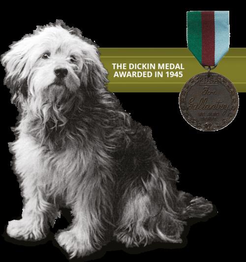 Ricky-Dog-Medal